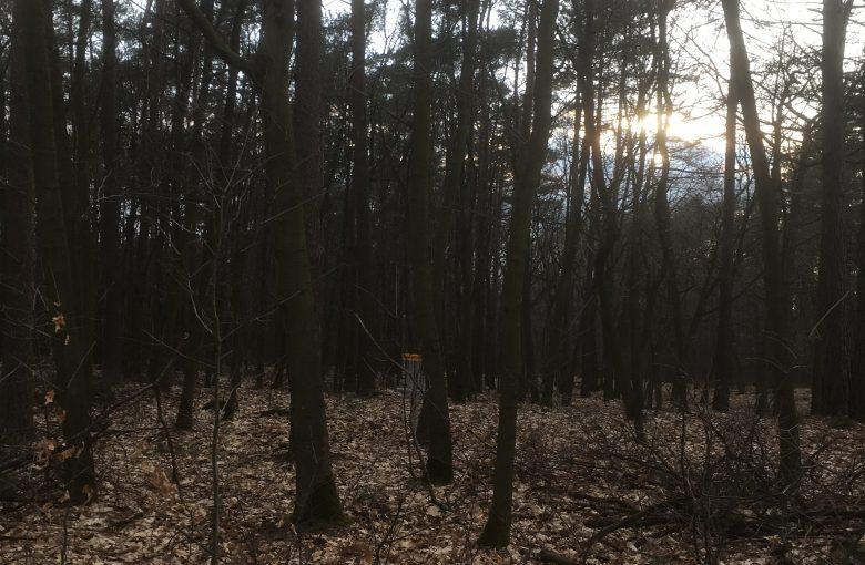 Hole 1 Treehouse